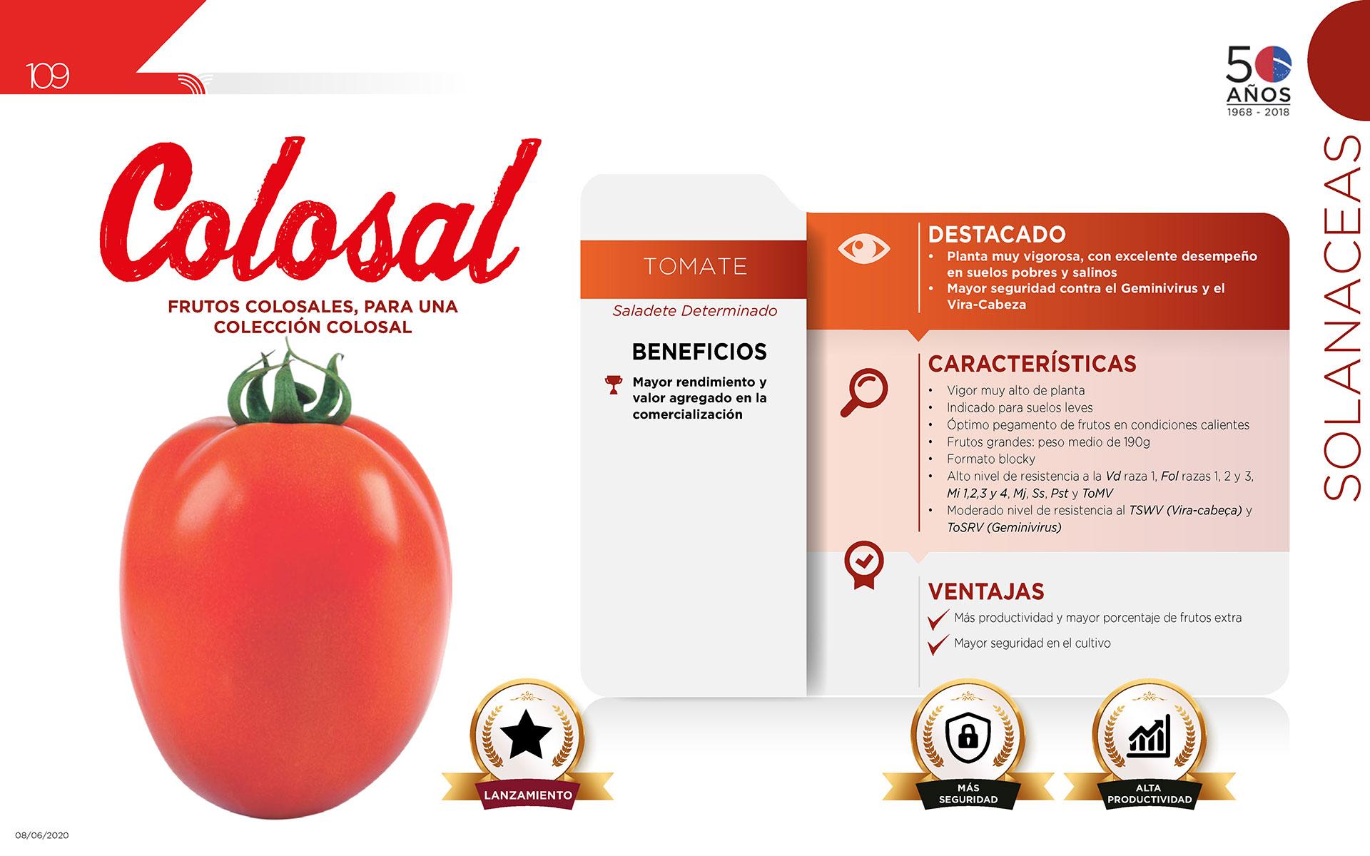 Colosal - Solanaceas