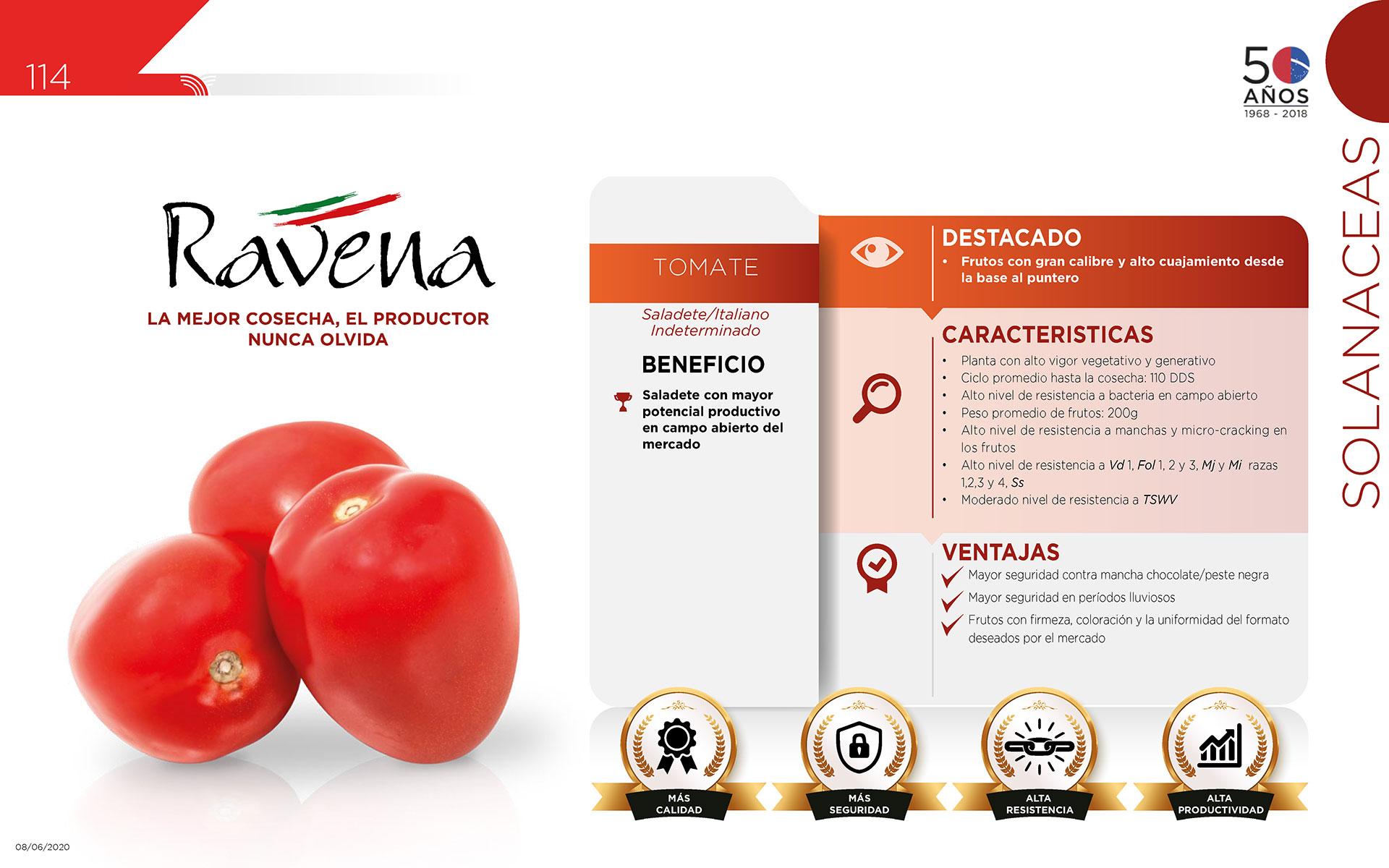 Ravena - Solanaceas