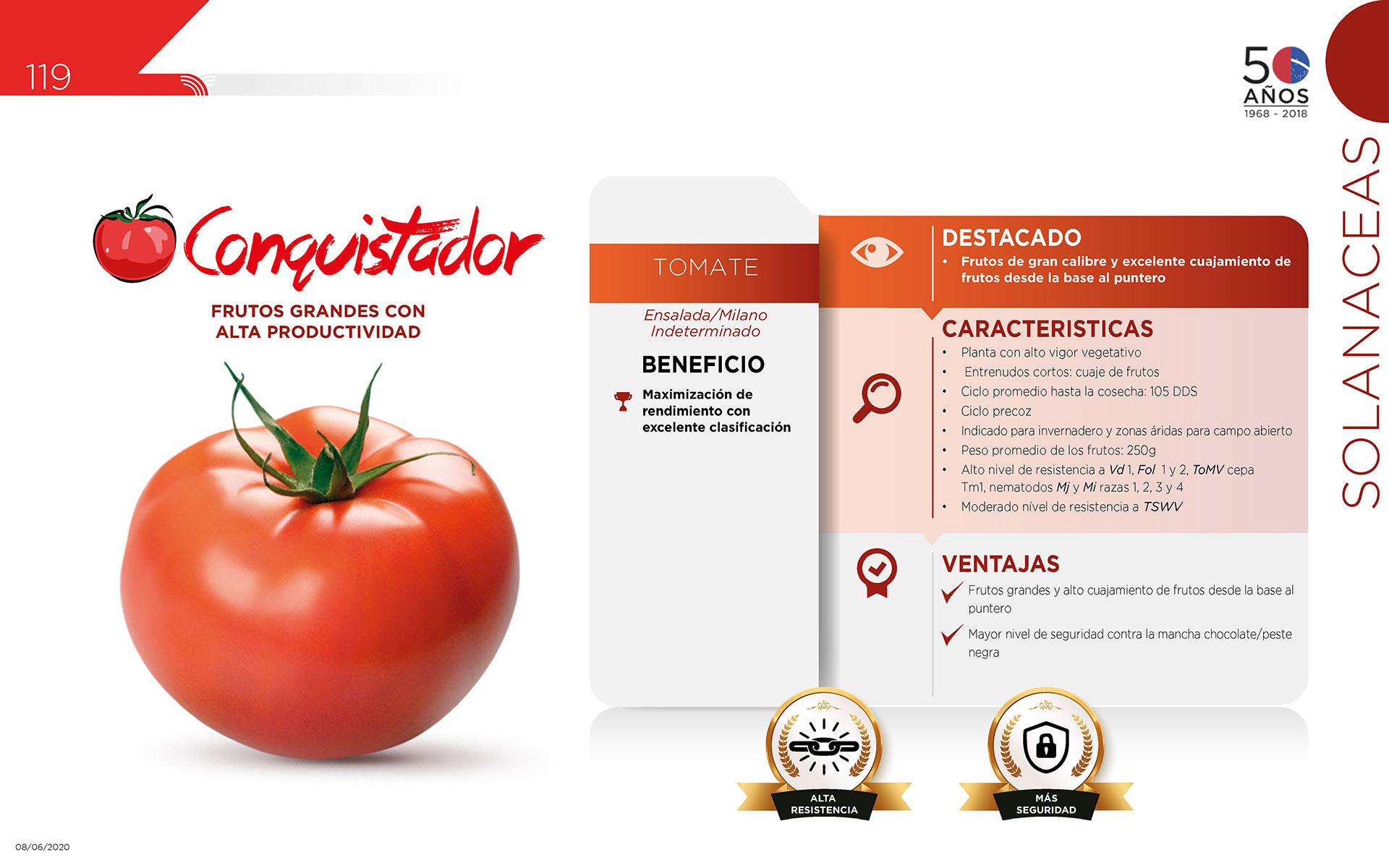 Conquistador - Solanaceas