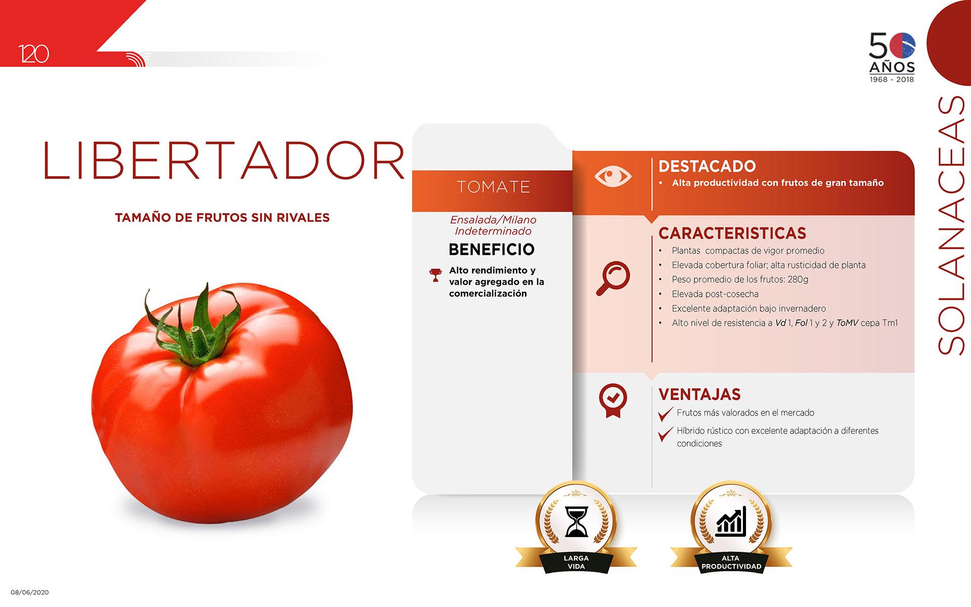 Libertador - Solanaceas