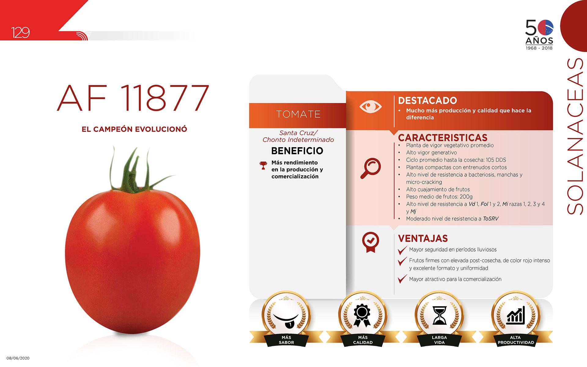 AF 11877 - Solanaceas