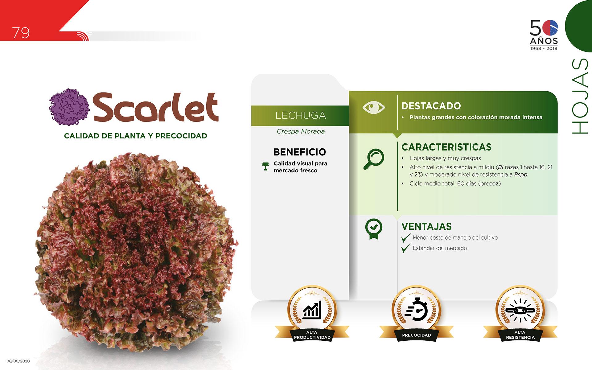 Scarlet - Hojas