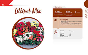 Lillipot Mix - Vaso